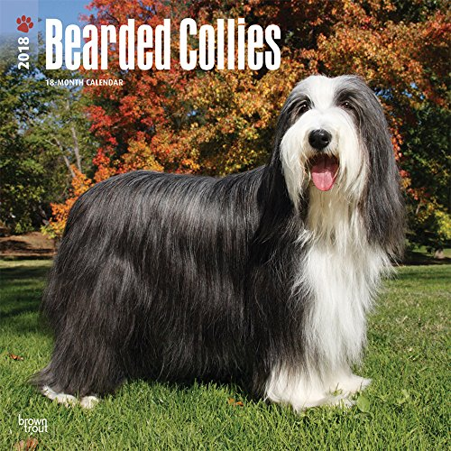 Bearded Collies 2018 12 x 12 Inch Monthly Square Wall Calendar, Animals Dog Breeds Bearded Collies (Multilingual Edition) Bearded Collie Dog Breed