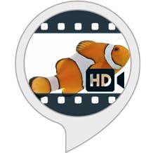 Ambient Visuals: Fishbowl