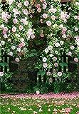 Daniu Wedding Background Flowers Photo Props Vinyl Romantic Photography Backdrops Trees 5x7FT GQ205