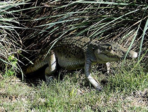 The King's Bay 4' Long Crocodile Sculpture Statue, Museum Garden True Life-like Alligator Swamp
