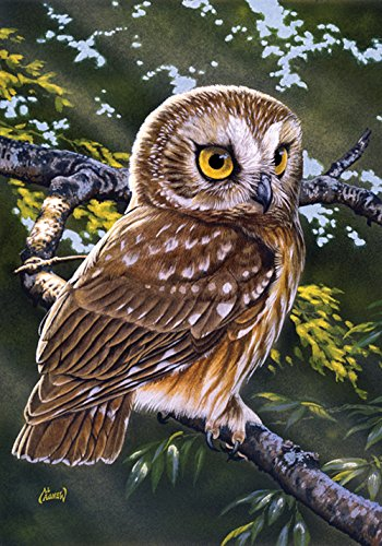 (Toland Home Garden Saw-Whet Owl 12.5 x 18 Inch Decorative Bird Branch Portrait Garden Flag)