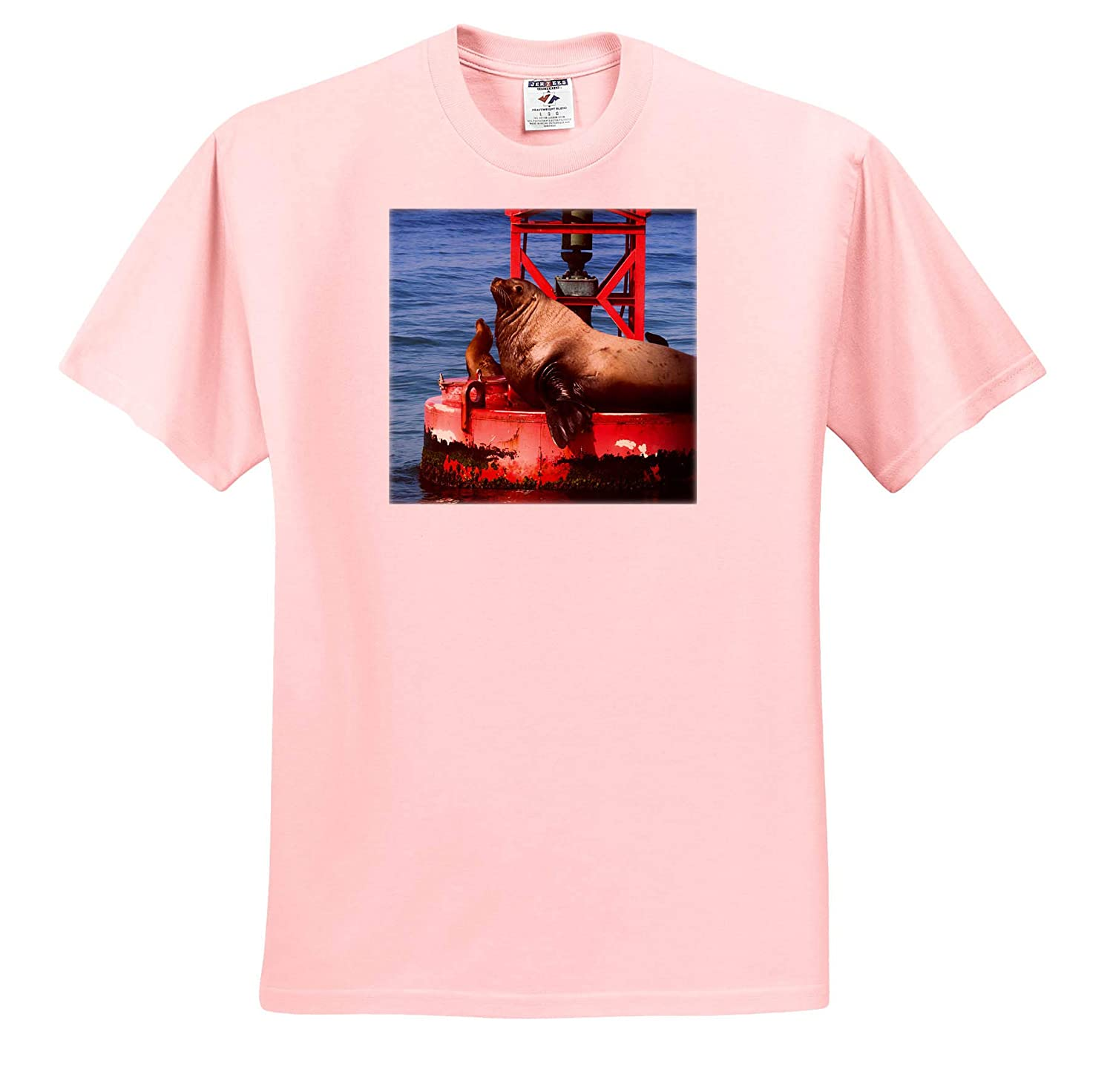 Ventura 3dRose Danita Delimont Adult T-Shirt XL ts/_314703 Sea Lions California USA Steller sea Lion on Harbor Buoy