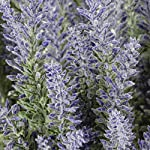 Houseables-Artificial-Lavender-Flower-Purple