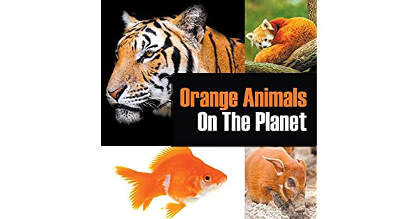 89e801188c7b Orange Animals On The Planet: Animal Encyclopedia for Kids (Colorful  Animals on the Planet Book 3) (English Edition) - eBooks em Inglês na  Amazon.com.br