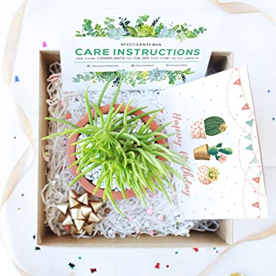 Gift Box - 1 Succulent (Birthday Greeting Card) : Garden & Outdoor