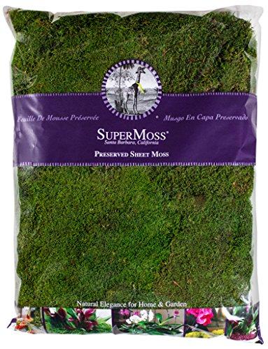 Super Moss 21585 Preserved Sheet Moss, Fresh Green, 32-Ounce by Super Moss