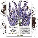 Seed Needs, Spike Lavender (Lavandula latifolia) 500 Seeds Non-GMO
