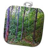 3dRose TDSwhite – Summer Seasonal Nature Photos - Summer Woods - 8x8 Potholder (phl_284462_1)