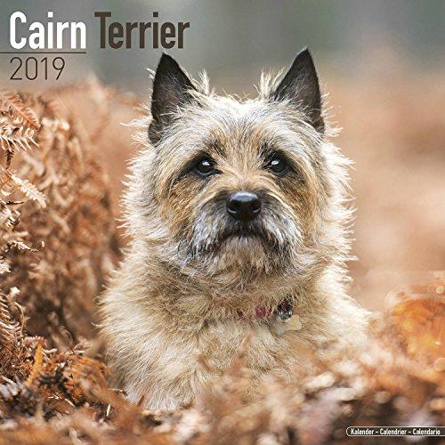 Cairn Terrier Calendar 2019 - Dog Breed Calendar - Wall Calendar 2018-2019