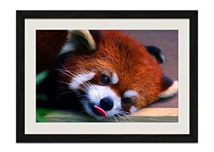 Amazon Cung Red Panda Grimace Wood Frame Poster Home Art