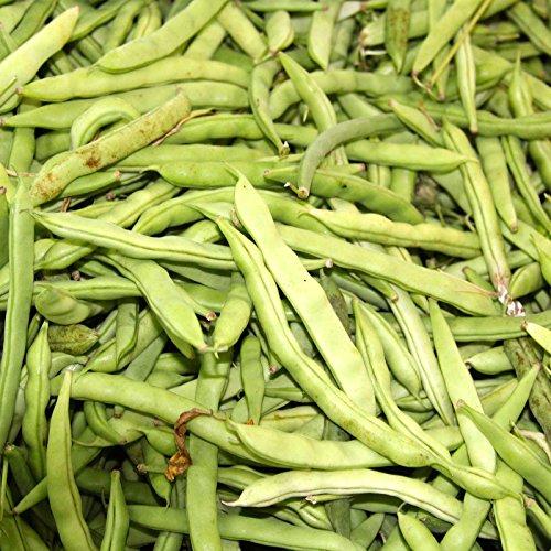 Kentucky Wonder Brown Pole Bean Seeds - 5 Lb - Non-GMO, Heirloom - Green Bean Vegetable Garden Seeds - Phaseolus vulgaris