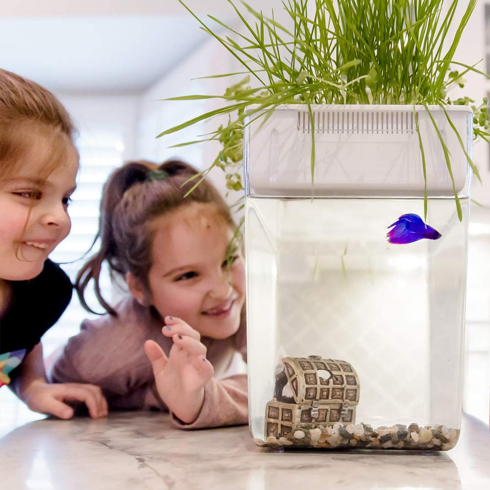 Back to the Roots Self Cleaning Aquaponic Betta Fish Tank Kit for Kids, with STEM Curriculum by Back to the Roots (Image #9)