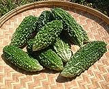 Bitter Melon Seeds - MEDICINAL BENEFITS - Bitter Gourd - Kakara Kaya - 10 Seeds