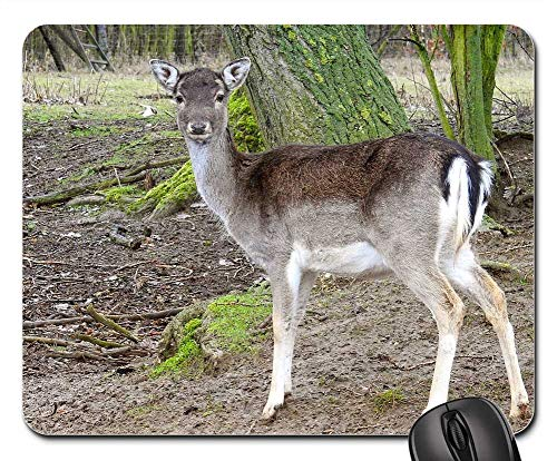 (Mouse Pad - Roe Deer Forest Fallow Deer Nature Wild Animal 2)