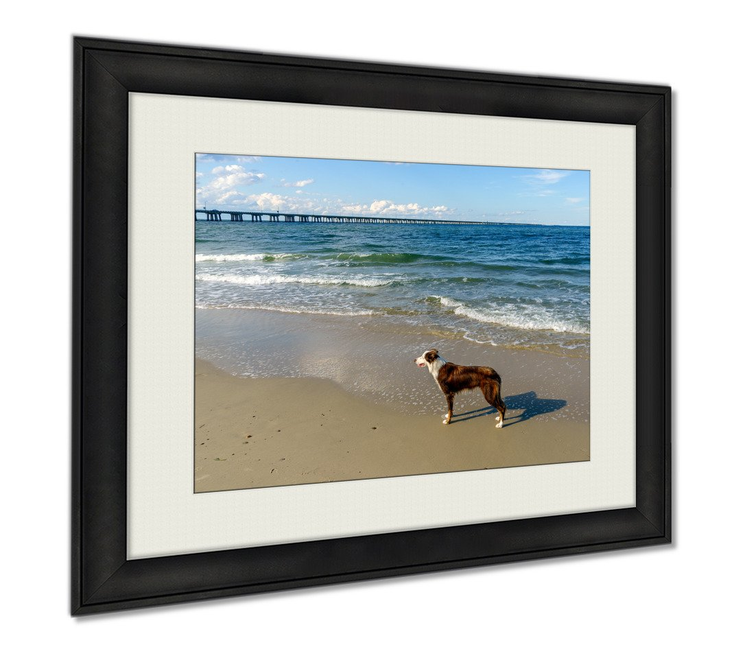 Ashley Framed Prints Border Collie At The Beach, Wall Art Home Decoration, Color, 34x40 (frame size), AG5458717
