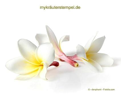Orquídea – Thai de – 500 ml – Aromaterapia Aceite de Tailandia – orchideenöl