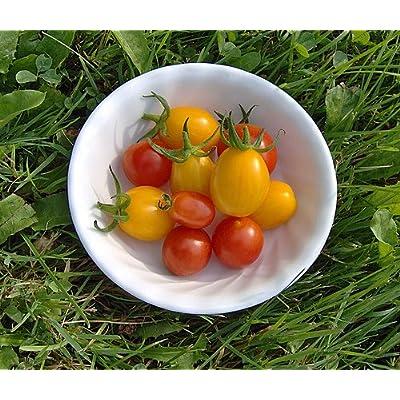 "(VTOCH)~""JELLY BEAN RED & YELLOW"" GRAPE TOMATO~Seeds!!!!!!~~~~Tiny Gems!! : Tomato Plants : Garden & Outdoor"