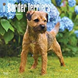 Border Terriers 2018 12 x 12 Inch Monthly Square Wall Calendar, Animals Dog Breeds Terriers