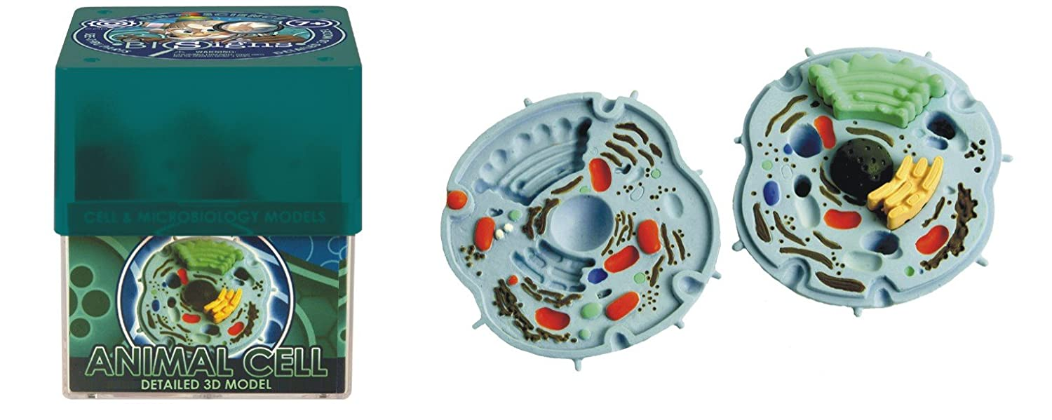 Ein O Science Biosigns Animal Cell Toys Games 3d Plant Diagram 8 Grade Image Galleries Imagekbcom
