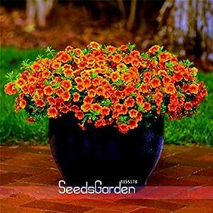 Venta! Calibrachoa Kabloom Crave Sunset vigorosas Semillas Anuales de la petunia-florecimiento libre, 100 Semilla / paquete, # TT8A57