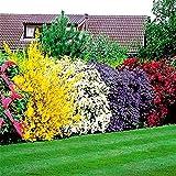 Flowering Shrubs Hedge - 5 hedge plants
