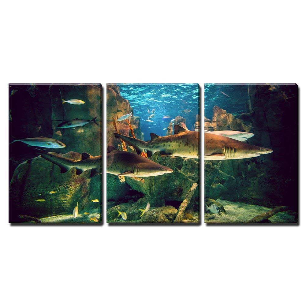 """wall26 - 3 Piece Canvas Wall Art - Two White Sharks in Istanbul Aquarium. - Modern Home Decor Stretched and Framed Ready to Hang - 16""""x24""""x3 Panels"""