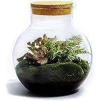 DIY Jardín en Botellas Sostenible de Botanicly: Bolder – Botanic Mix (Altura: ca. 30 cm, Anchura: ca. 18 cm)