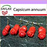 SAFLAX - Chili - Peter Peppers Penis Chili - 10 seeds - Capsicum annuum