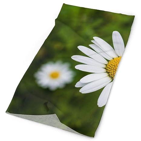 Fiori Bianchi Selvatici.Scarf Wrap Natura Erba Pianta Campo Bianco Flora Fiore Selvatico