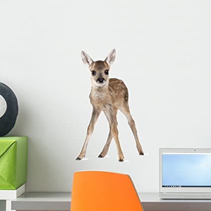 Wallmonkeys Wall Decals Roe Deer Fawn Standing Against White Background Peel and Stick Wall Decal & Amazon.com: Wallmonkeys Wall Decals Roe Deer Fawn Standing Against ...