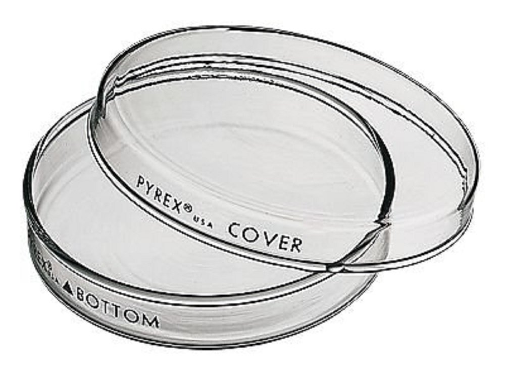 Pyrex 3160-101 Brand 3160 Petri Dish; 100 x 15 mm, Pack of 12 by Pyrex