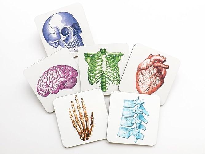 Amazon.com: Colorful Medical Human Anatomy Coasters 3.75 inch square ...