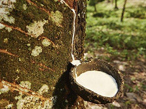 Mesoamerican Plants, Cuisine, and Medicine (Cuisine Chocolate Global)