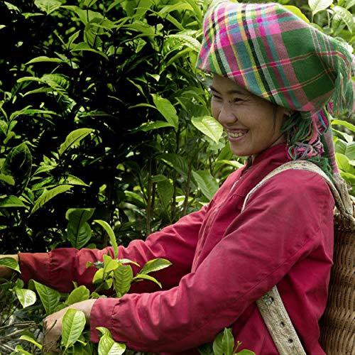 Pukka Herbs Tea Selection Box, Collection of Organic Herbal Teas (1 Box, 45 Sachets)