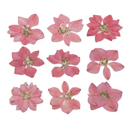 Pressed Flower Natural Dried Flowers Pink Larkspur 20 Pieces