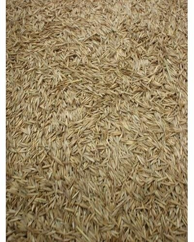 Top 10 best grass seed red fescue