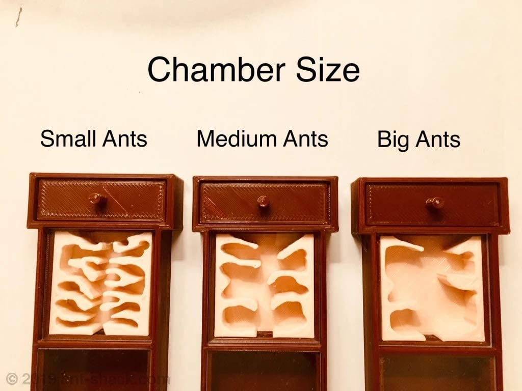 Premium Ant Nest Formicarium Kit for Live Ant Colony Used by Antkeepers Worldwide ANT SHACK Ant Colony Founding Kit
