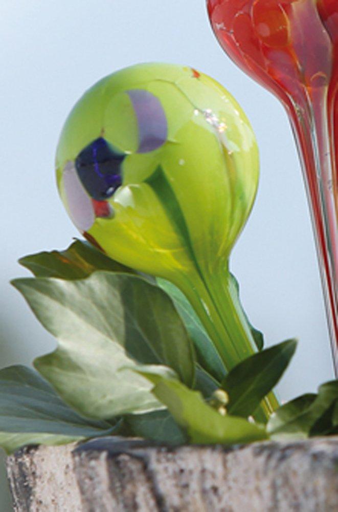 Gilde Dispensador de Agua Vidrio soplado para Flores - Maceta (3 de Varios: Amazon.es: Juguetes y juegos