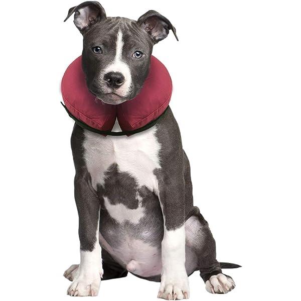 iCollr - El Collar Inflable - Collar Protector para Perros y ...