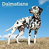 Dalmatians 2019 12 x 12 Inch Monthly Square Wall Calendar, American Dog Breeds (Multilingual Edition) by