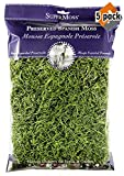 Super Moss 26912 Spanish Moss Preserved, Grass, 8oz (200 Cubic inch) (5)
