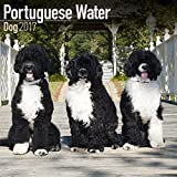 Portuguese Water Dog Calendar 2017 - Dog Breed Calendars - 2016 - 2017 wall calendars - 16 Month by Avonside