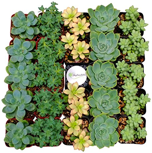 128 Plants (Shop Succulents Assorted Succulent (Collection of 128))