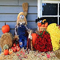 GladsBuy Lovely Scarecrow 6 x 6 Computer Printed Photography Backdrop Bumper Harvest Theme Background LMG-097