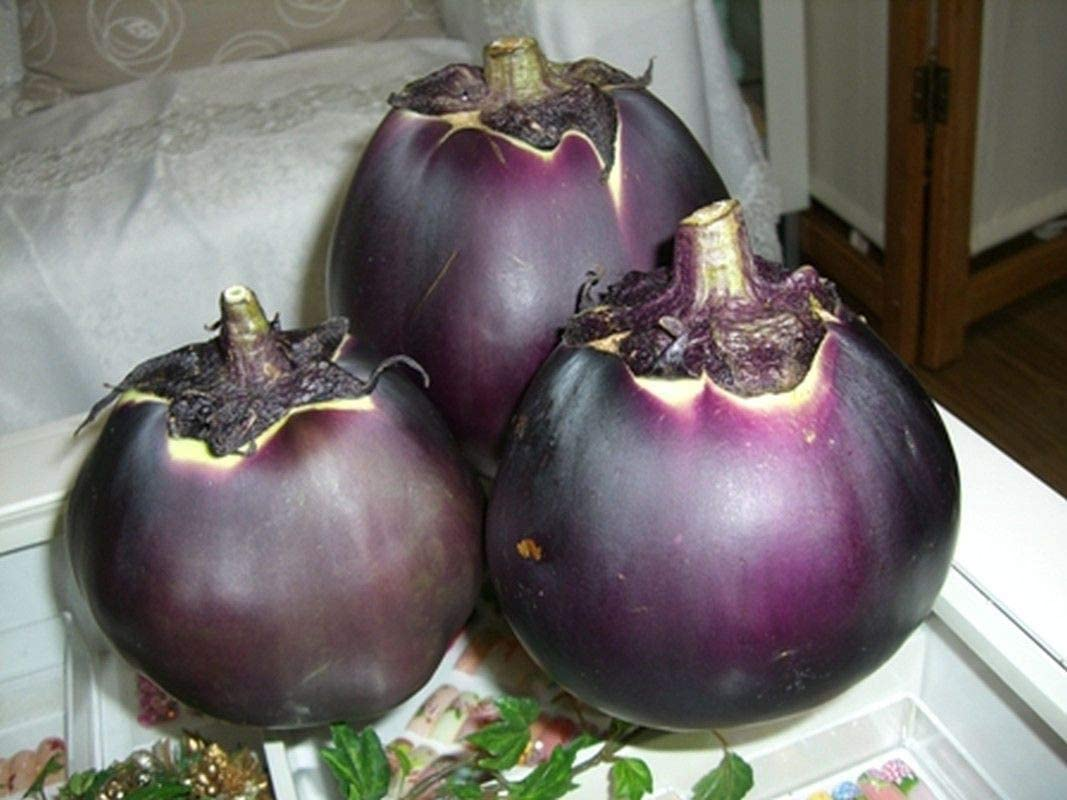 Sweet with a tender delicate texture..Free Shipping!! Kamo Japanese Eggplant