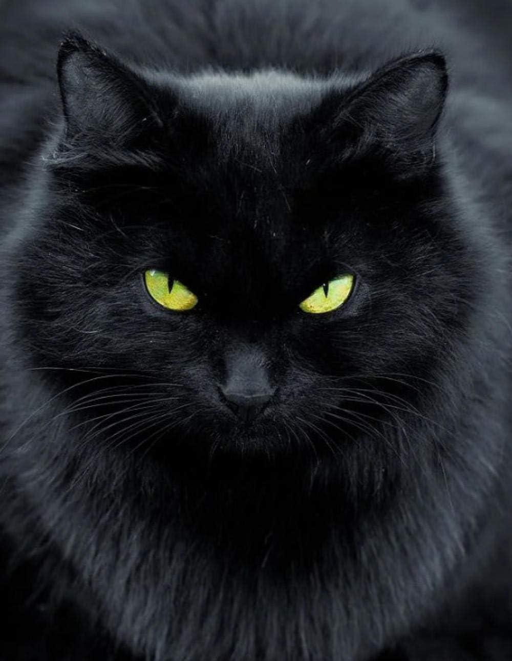 OKOUNOKO Numero Pinturas Set, Gato Negro De Ojos Amarillos, Gran ...