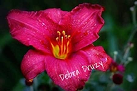 Debra Druzy