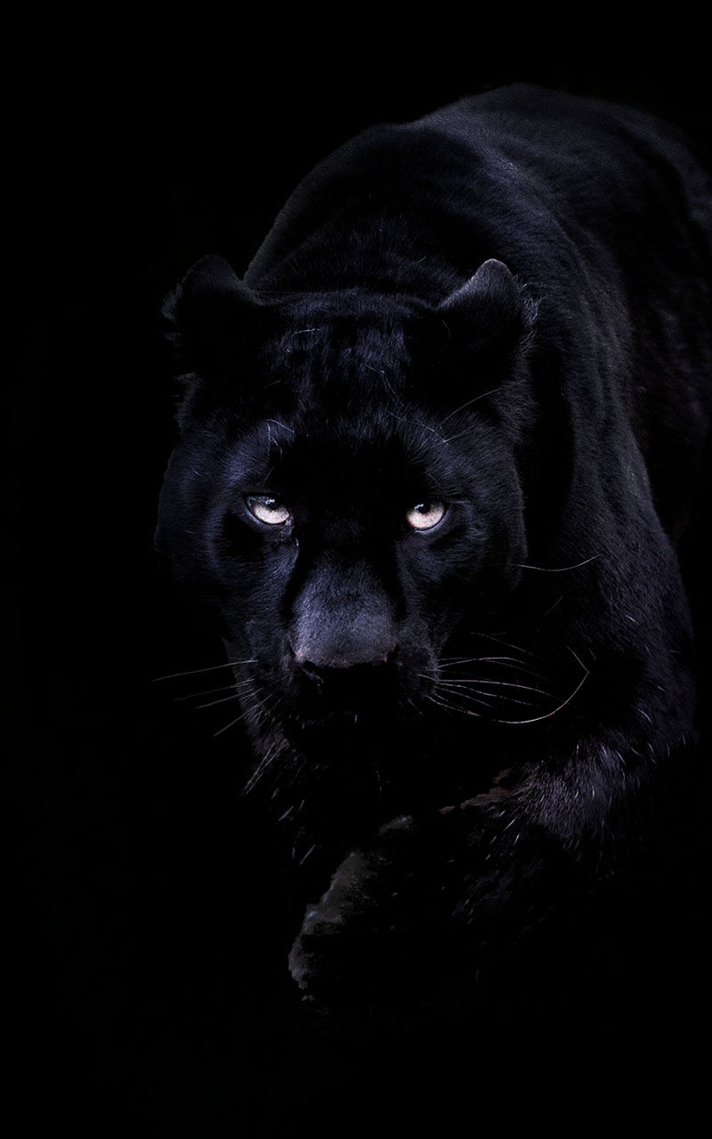 Amazon Com Black Panther Live Wallpaper Appstore For Android