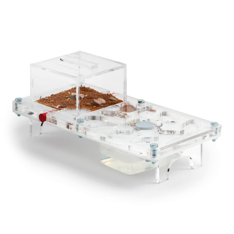 anthouse Ant Farm Mushroom Kit (Formicarium, Ants)