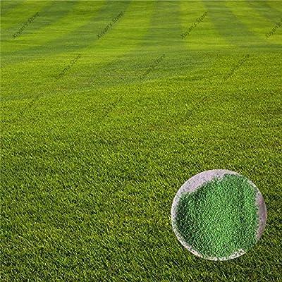 500 قطعة بذور العشب Zoysia الأخضر لينة عداء النباتات الطبيعية لحديقة المنزل Amazon Ae